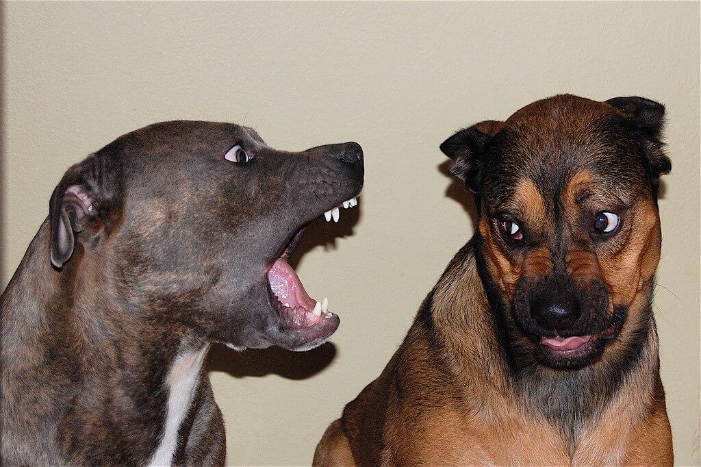 Streitende Hunde