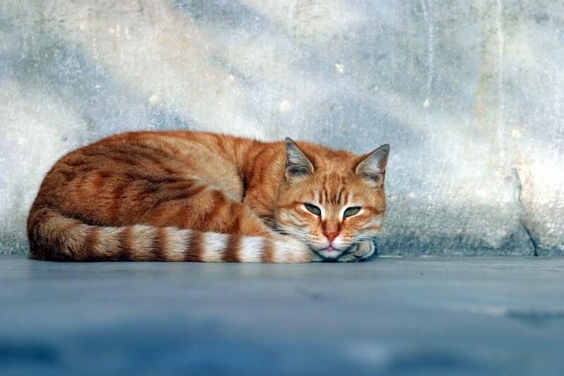 Katze. Symbolbild für das Internet