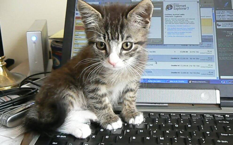 Kätzchen auf einem Laptop