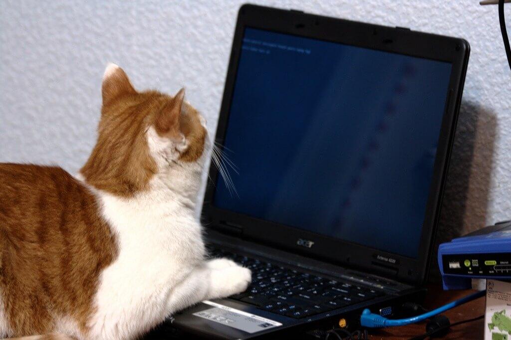 Katze an Laptop